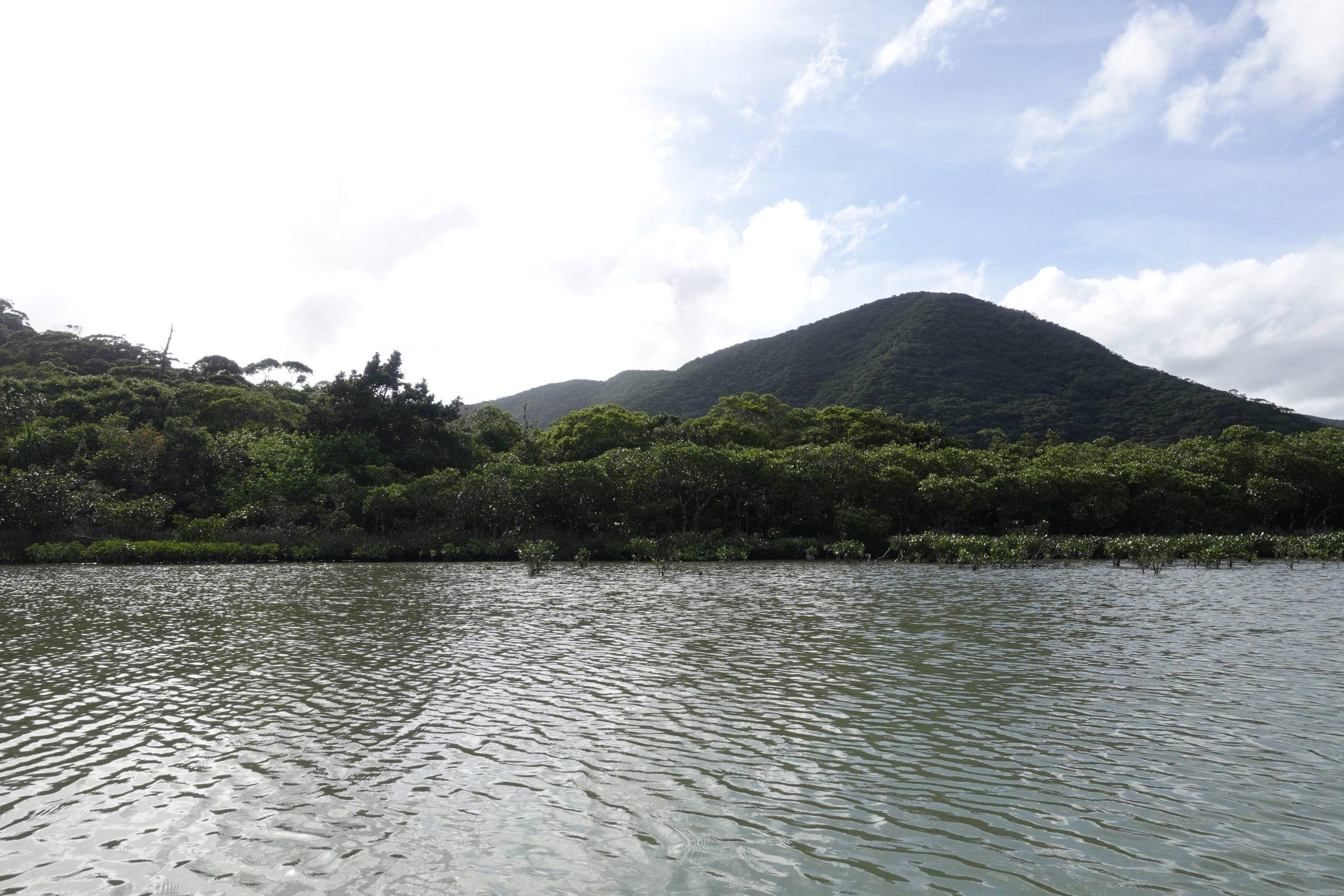奄美大島観光マングローブ08
