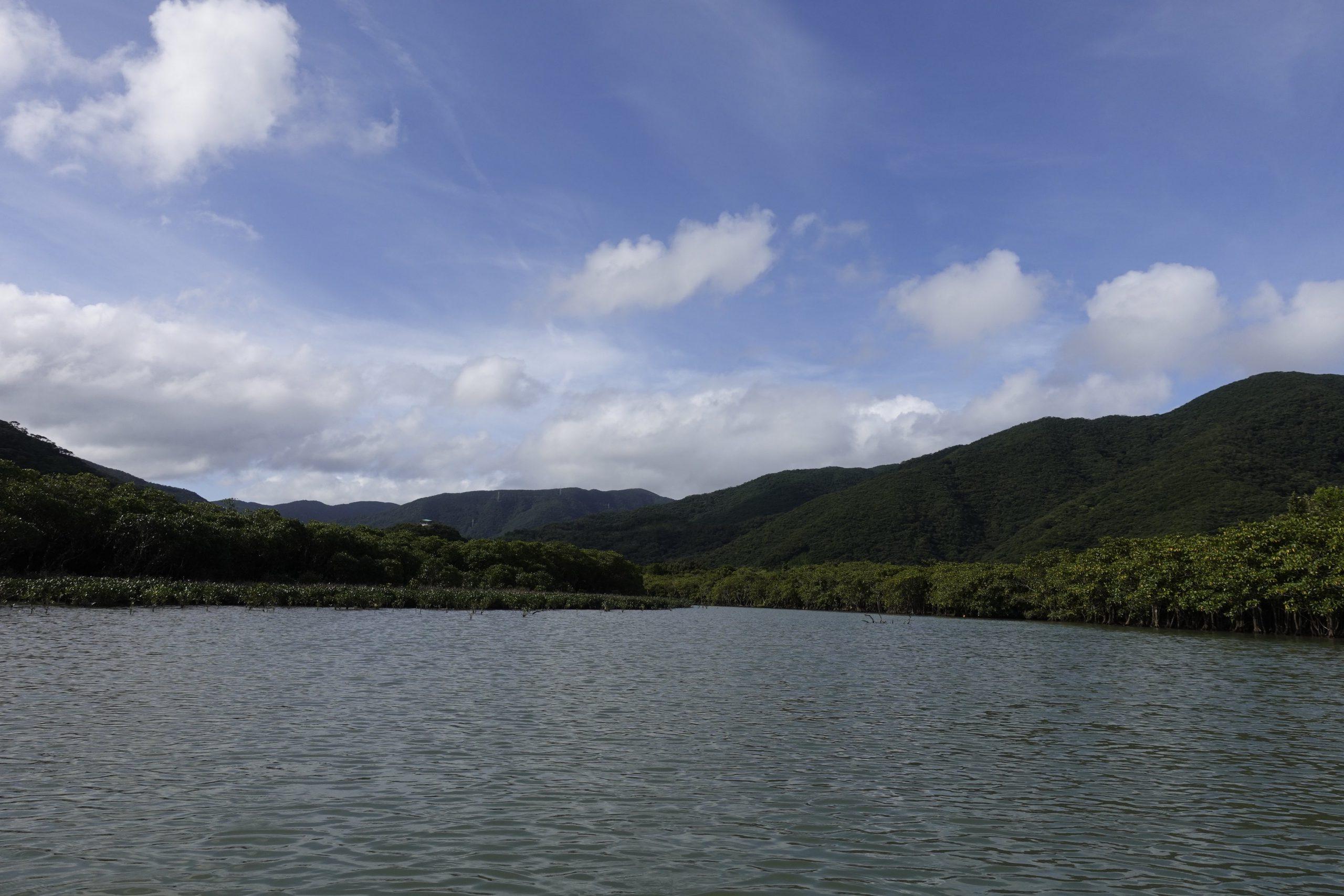 奄美大島観光マングローブ07